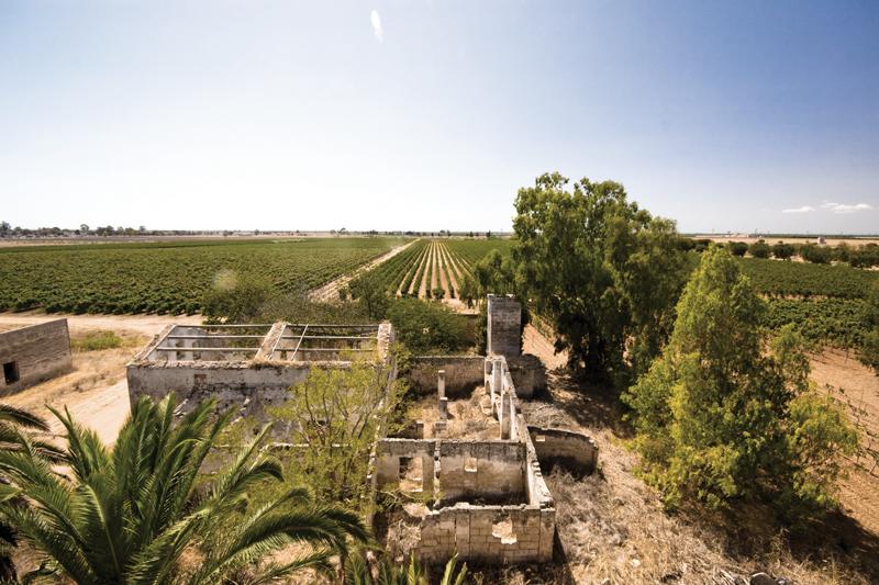 Tenuta Marmorelle | Tenute Rubino | Vini del Salento