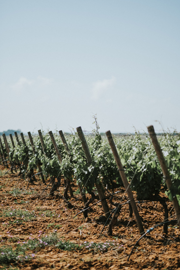 Tenuta Jaddico | Tenute Rubino | Vini del Salento