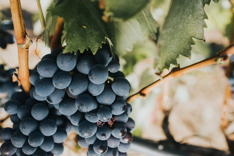 Tenuta Punta Aquila | Tenute Rubino | Vini del Salento