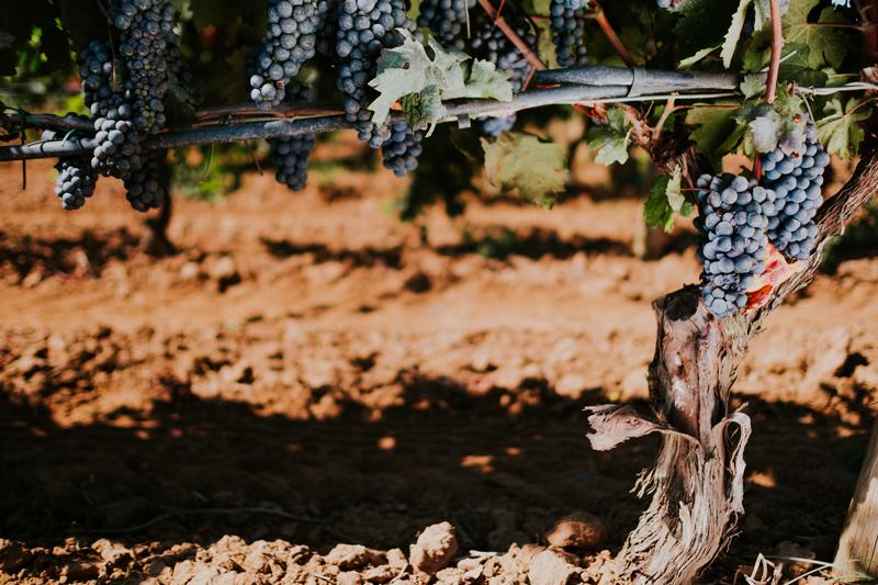 Tenuta Uggìo | Tenute Rubino | Vini del Salento