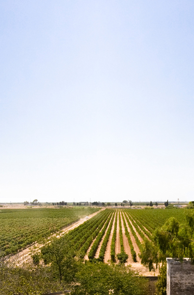Marmorelle | Tenute Rubino | Vini del Salento