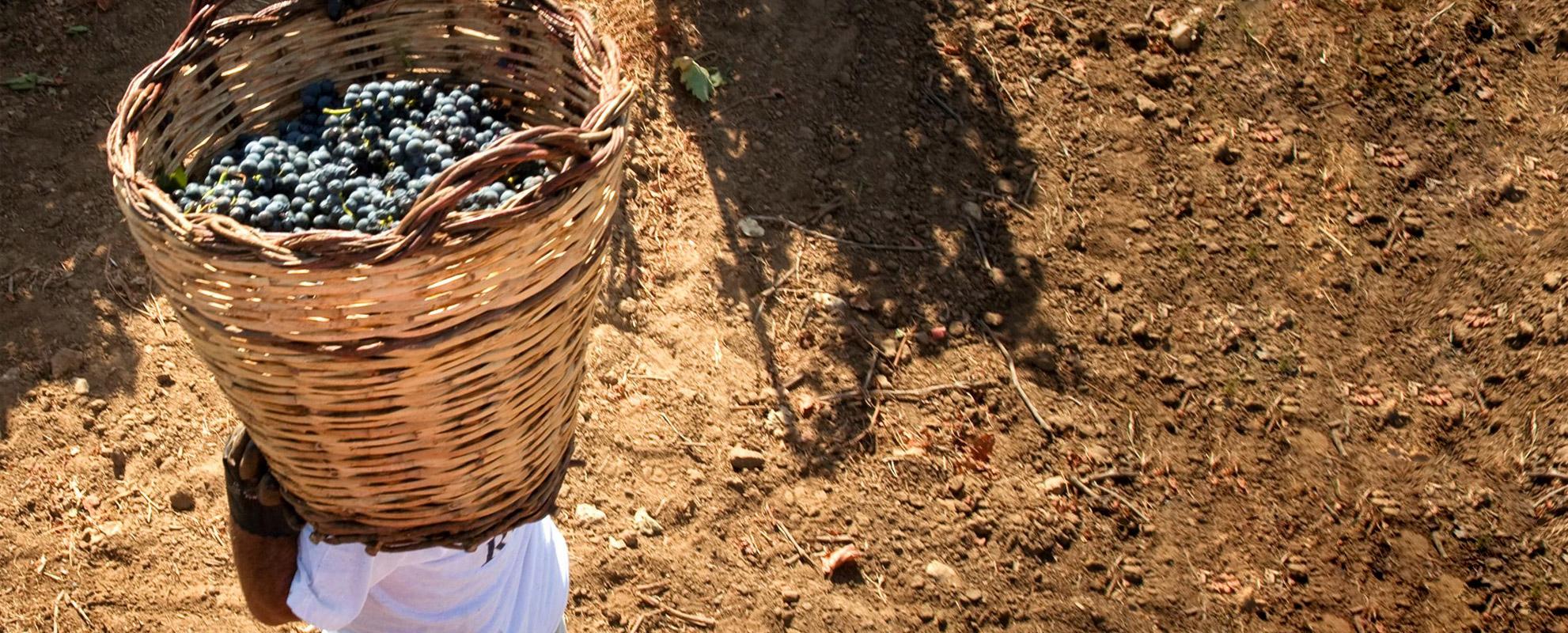 TR Punta Aquila - Tenute Rubino | Vini del Salento