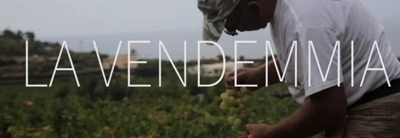 LA WINERAM PRODUCTIONS PER LA PRIMA VOLTA IN ITALIA REALIZZA UN VIDEO EMOZIONALE SULLA VENDEMMIA