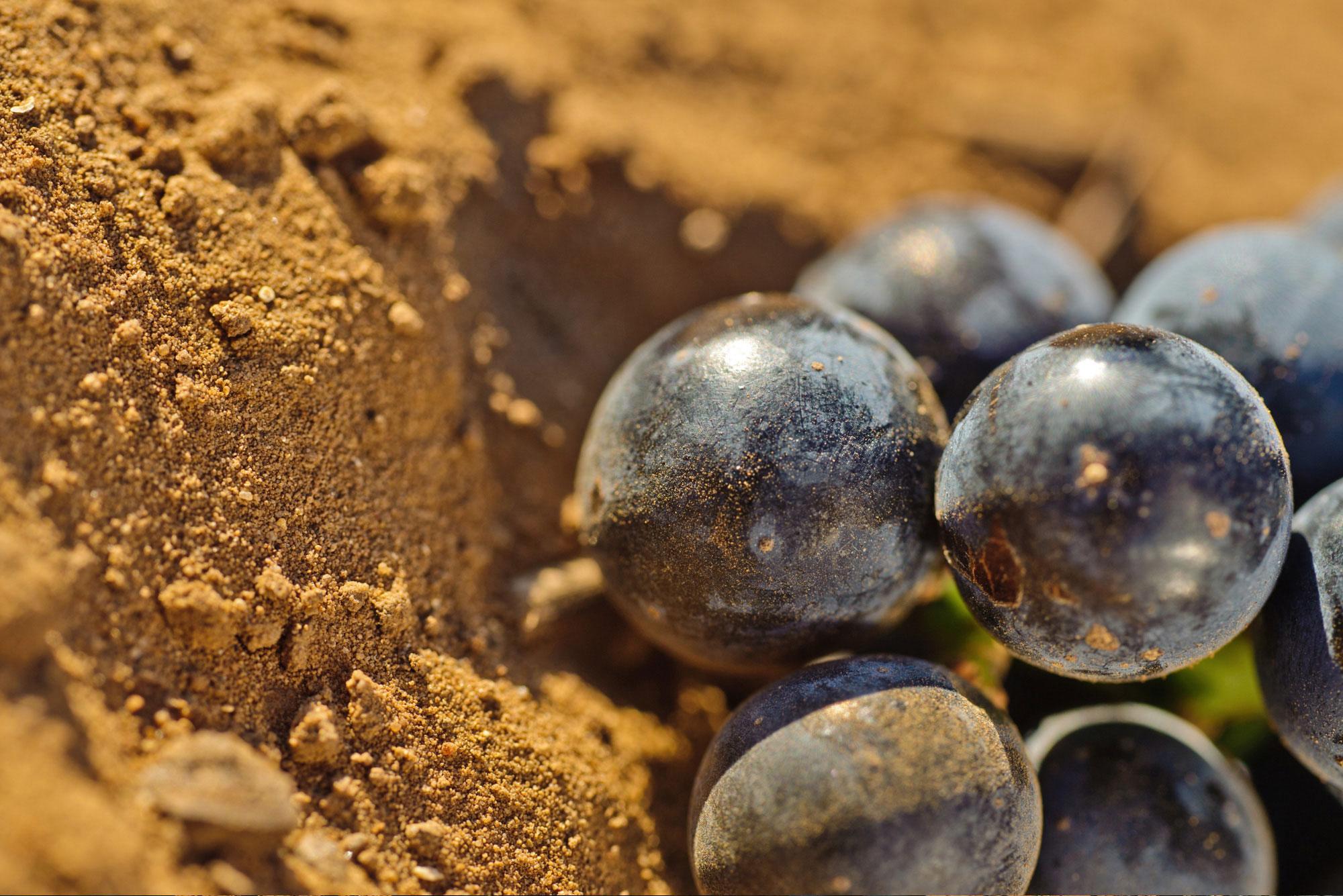 TR Jaddico - Tenute Rubino | Vini del Salento