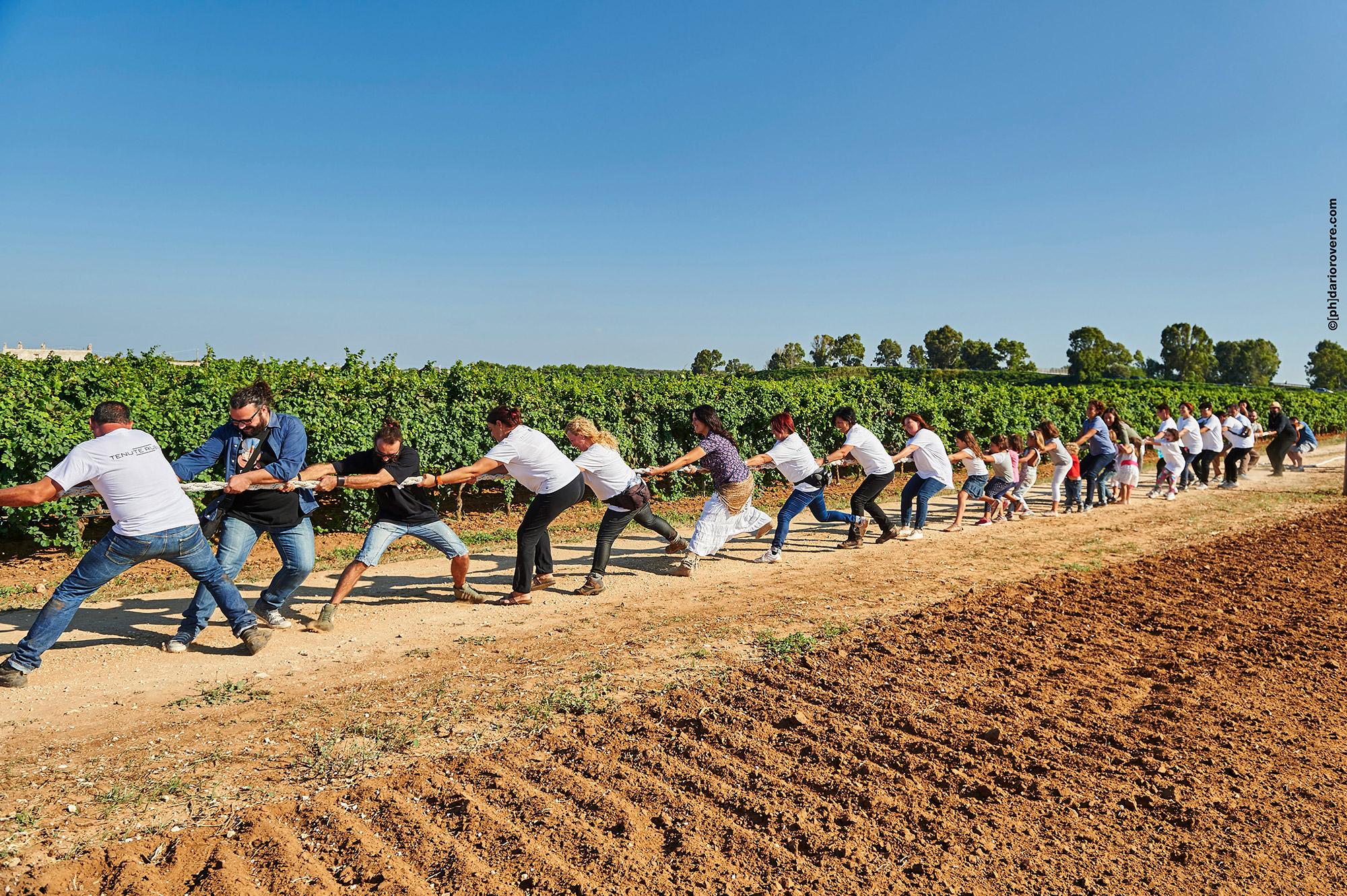 Vendemmia delle Donne 2015 - Tenute Rubino | I Vini del Salento