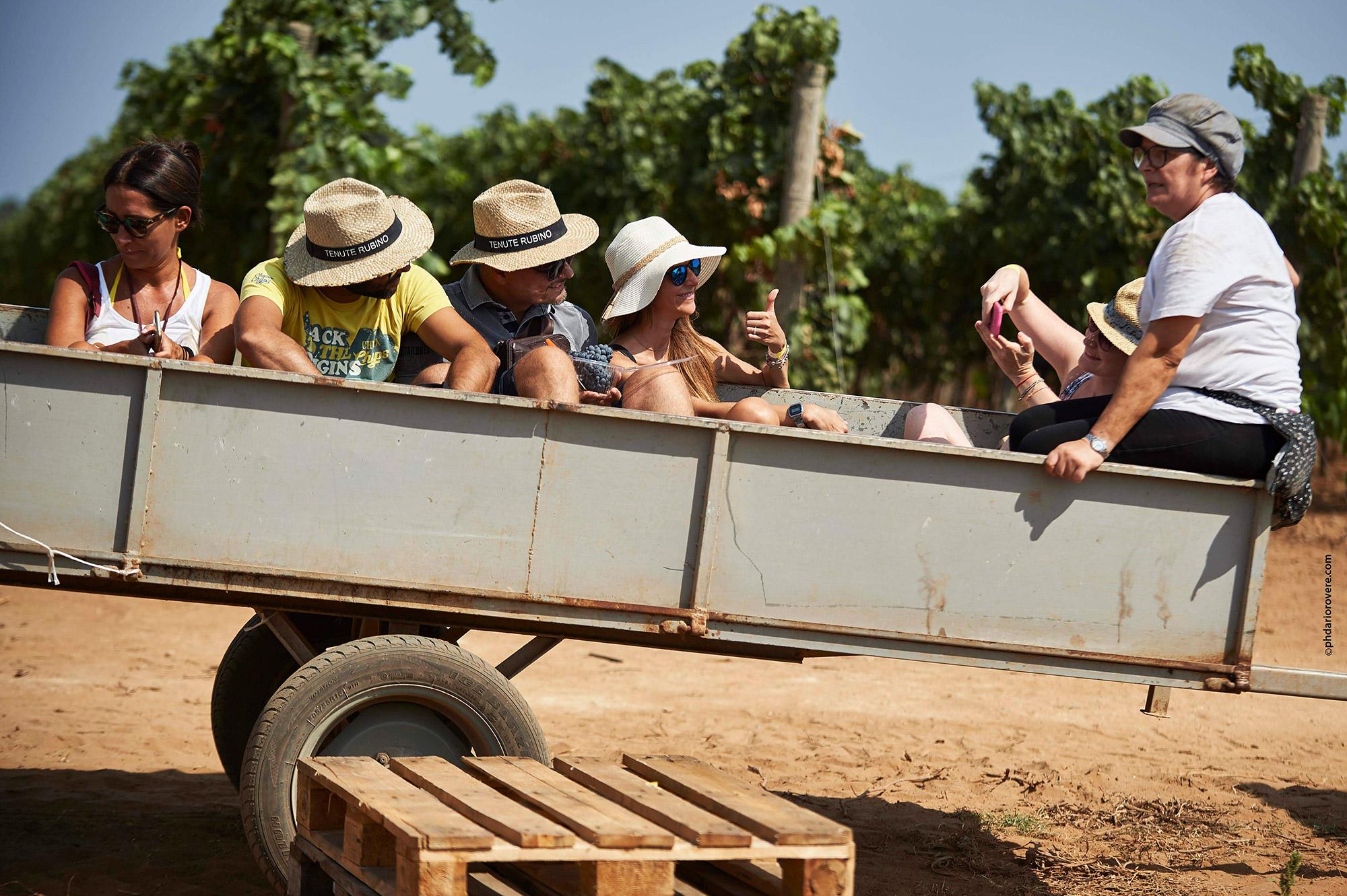 Vendemmia delle Donne 2017 - Tenute Rubino | I Vini del Salento