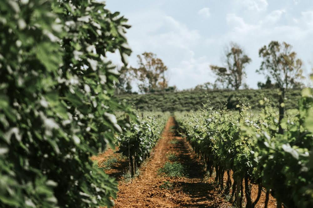 Visita in cantina - Tenute Rubino | I Vini del Salento