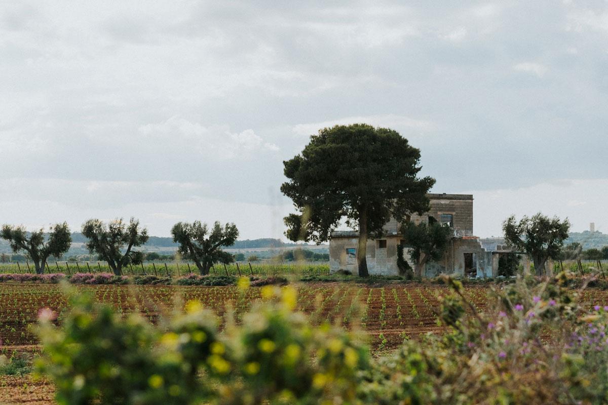 Palombara | Tenute Rubino | Vini del Salento