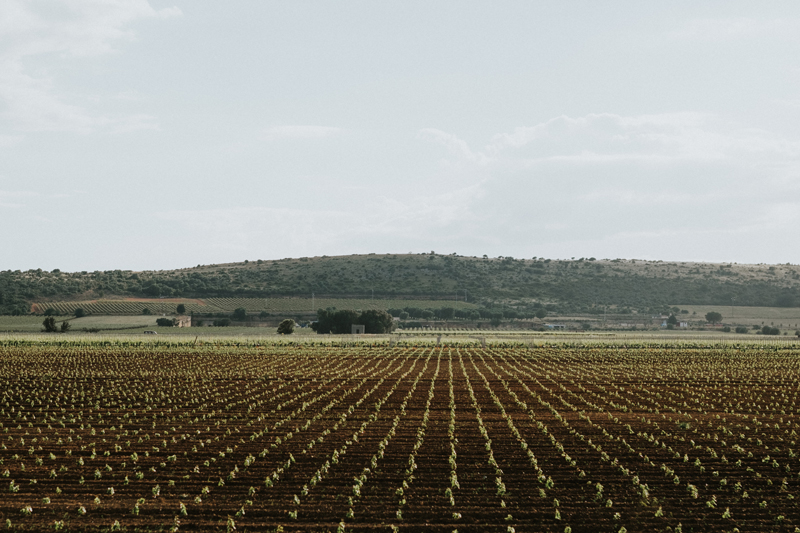 Tenuta Palombara | Tenute Rubino | Vini del Salento