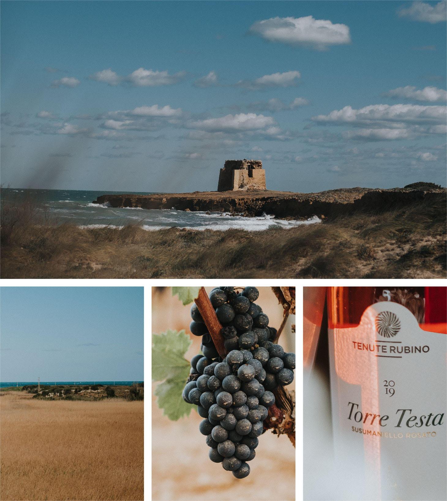 Torre Testa Rosato 2019 - Tenute Rubino | I vini della Puglia