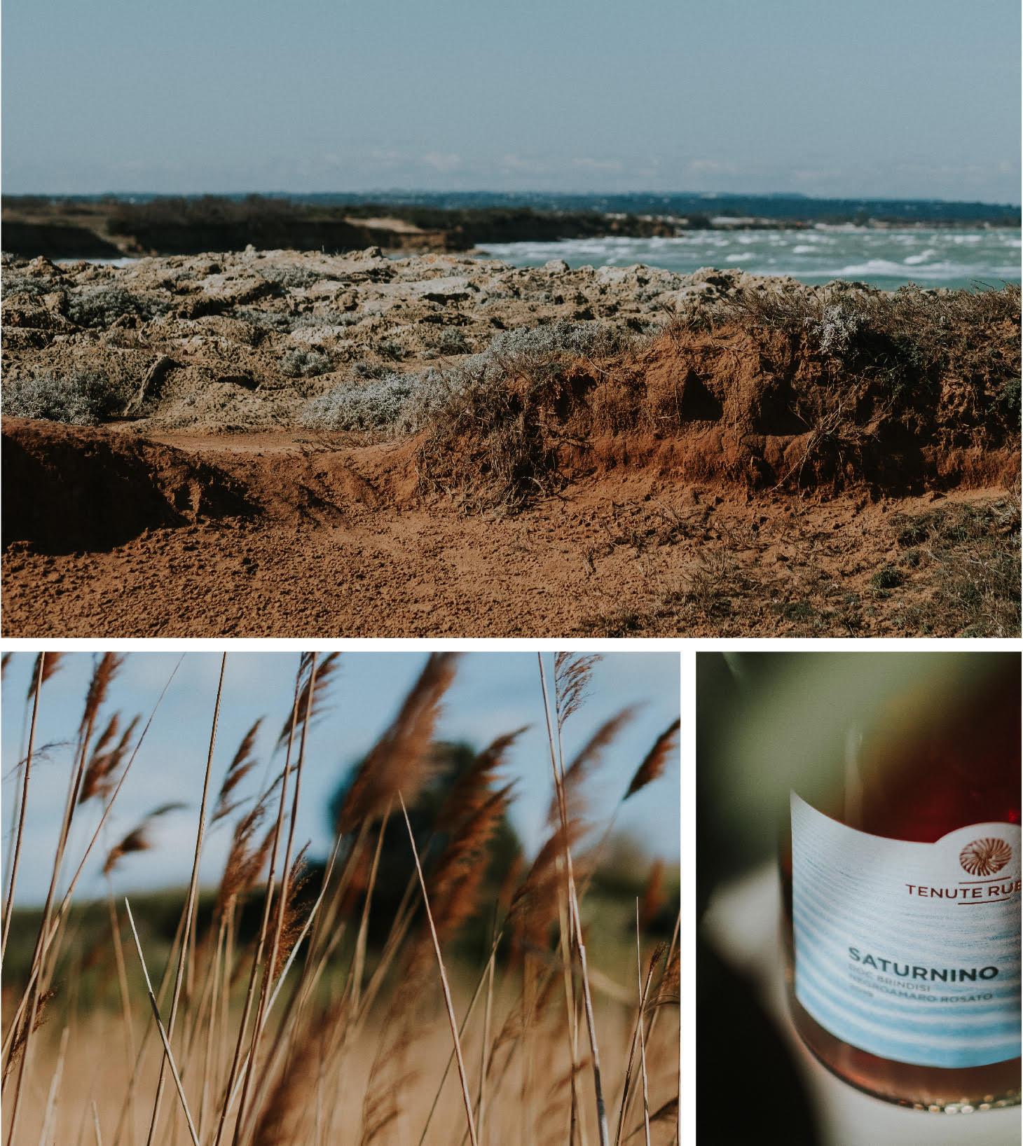 Saturnino 2019 - Tenute Rubino | I vini della Puglia