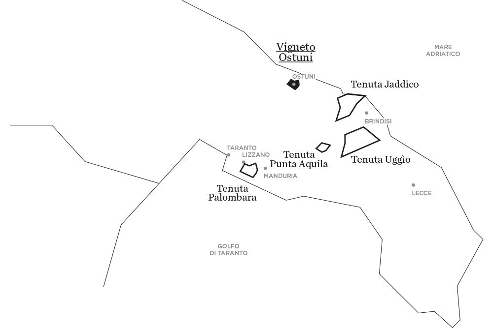 Il Vigneto di Ostuni | Le tenute di Tenute Rubino - Casa del Susumaniello