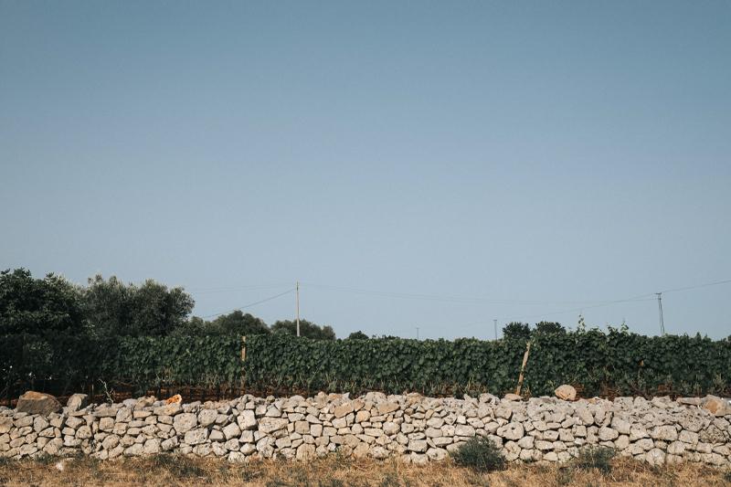 The Ostuni vineyard   Tenute Rubino   Vini del Salento