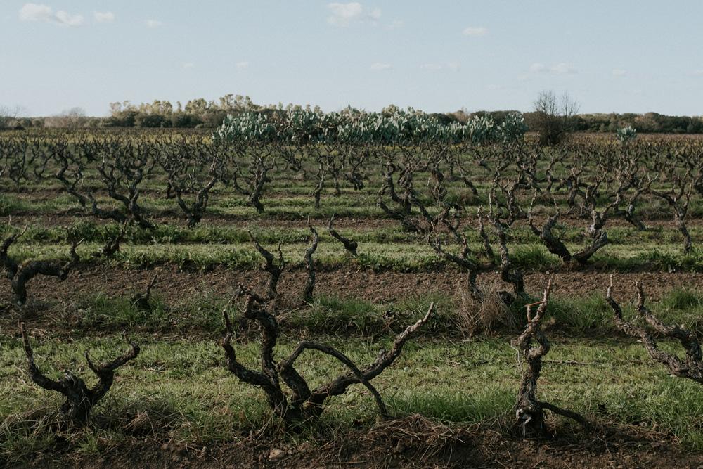 Vite ad Alberello | Famiglia Rubino | Tenute Rubino | I Vini della Puglia