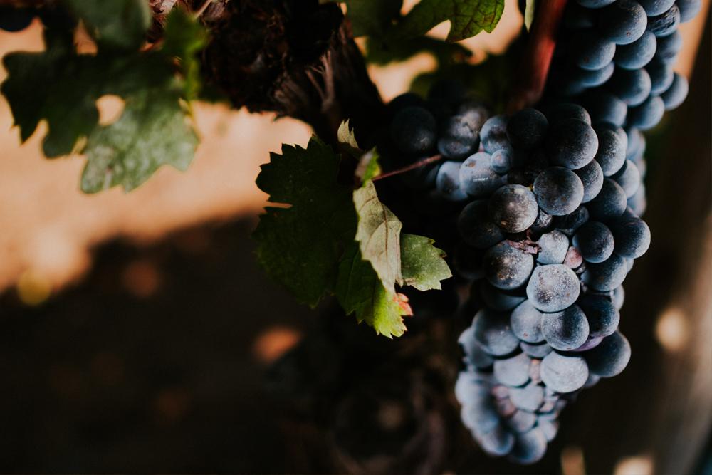 Primitivo | Famiglia Rubino | Tenute Rubino | I Vini della Puglia